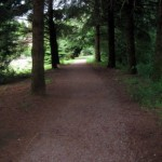 A shaded section of path along the Summer Solstice 5k course.
